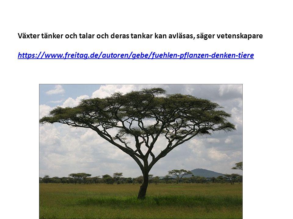 Växter tänker och talar och deras tankar kan avläsas, säger vetenskapare https://www.freitag.de/autoren/gebe/fuehlen-pflanzen-denken-tiere