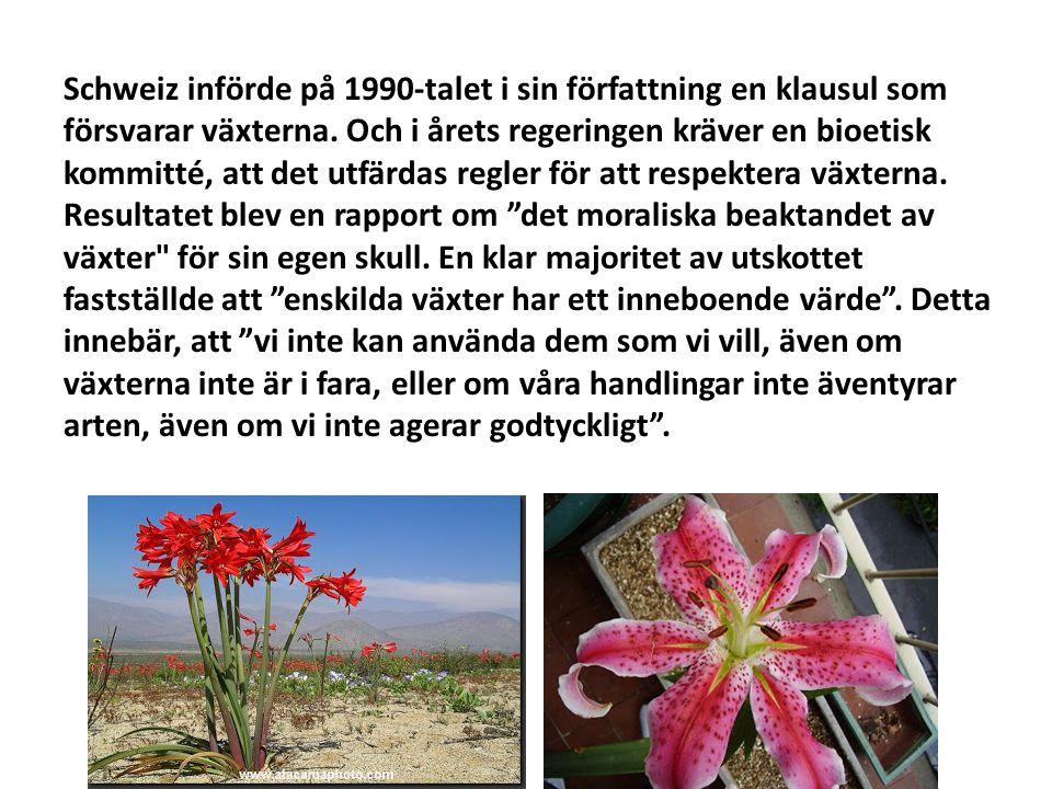 Schweiz införde på 1990-talet i sin författning en klausul som försvarar växterna. Och i årets regeringen kräver en bioetisk kommitté, att det utfärda