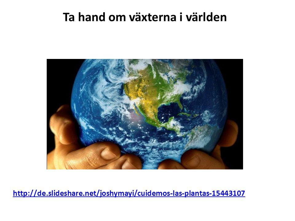 Ta hand om växterna i världen http://de.slideshare.net/joshymayi/cuidemos-las-plantas-15443107