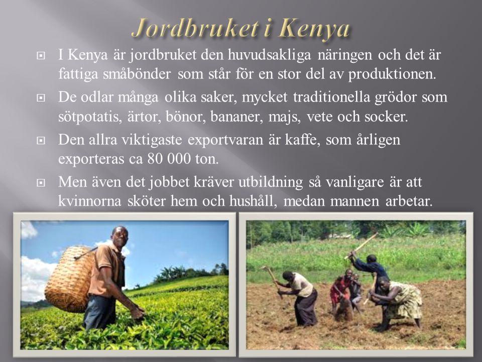  I Kenya är jordbruket den huvudsakliga näringen och det är fattiga småbönder som står för en stor del av produktionen.  De odlar många olika saker,