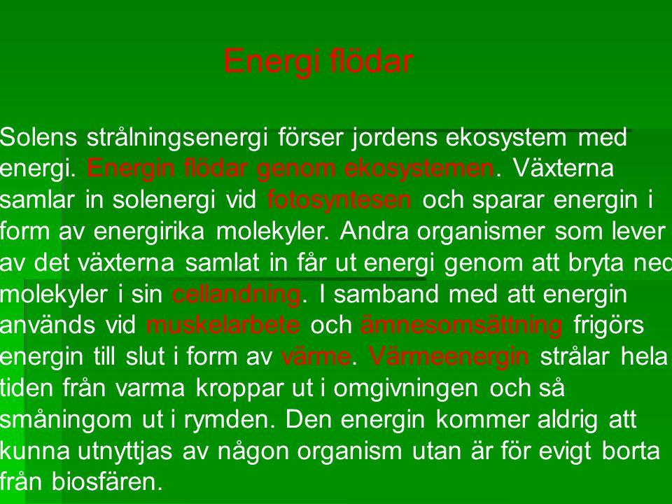 Energi flödar Solens strålningsenergi förser jordens ekosystem med energi. Energin flödar genom ekosystemen. Växterna samlar in solenergi vid fotosynt