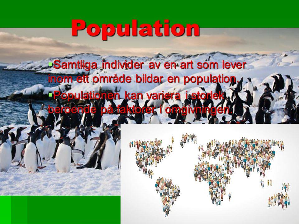Population Population  Samtliga individer av en art som lever inom ett område bildar en population.  Populationen kan variera i storlek beroende på