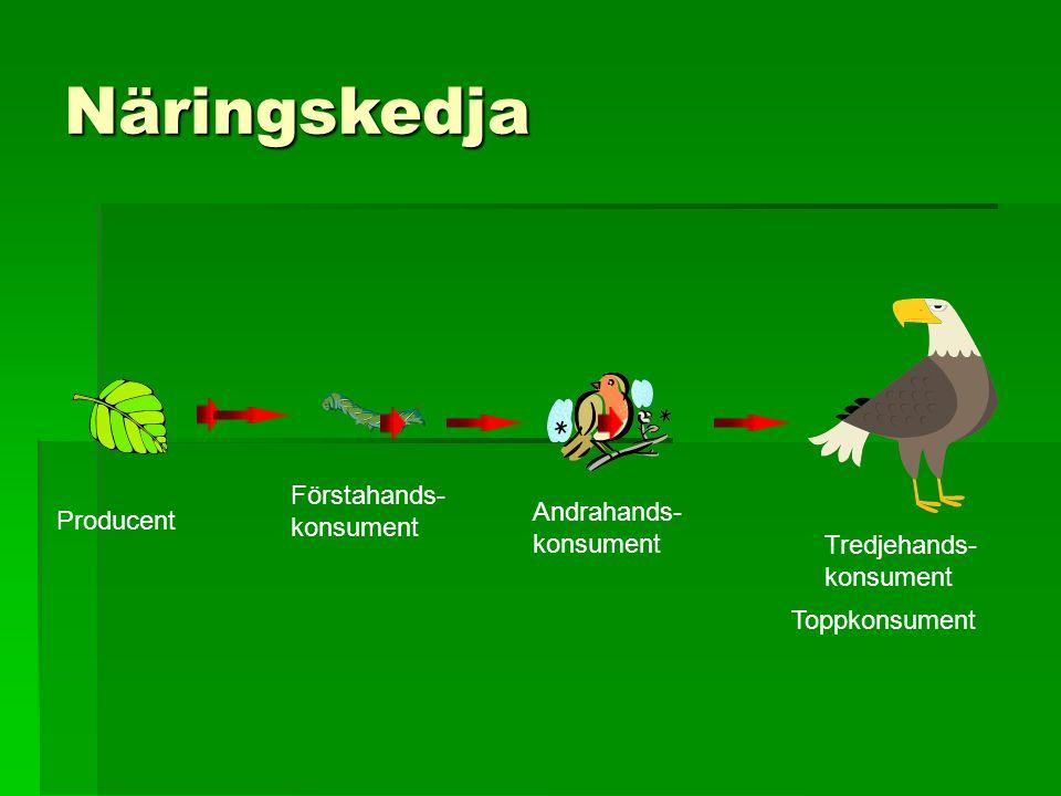 Näringskedja Producent Förstahands- konsument Andrahands- konsument Tredjehands- konsument Toppkonsument