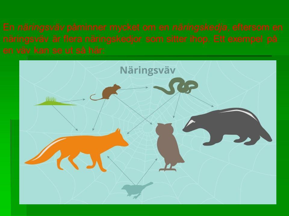 . En näringsväv påminner mycket om en näringskedja, eftersom en näringsväv är flera näringskedjor som sitter ihop. Ett exempel på en väv kan se ut så
