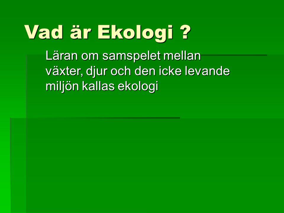 Vad är Ekologi ? Läran om samspelet mellan växter, djur och den icke levande miljön kallas ekologi