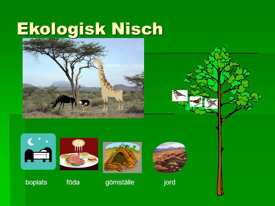 Ekologisk Nisch boplatsfödagömställejord