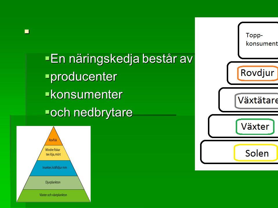 .  En näringskedja består av  producenter  konsumenter  och nedbrytare