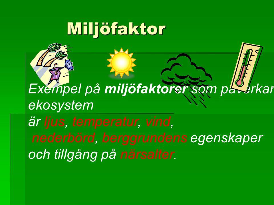 Miljöfaktor Miljöfaktor Exempel på miljöfaktorer som påverkar ekosystem är ljus, temperatur, vind, nederbörd, berggrundens egenskaper och tillgång på