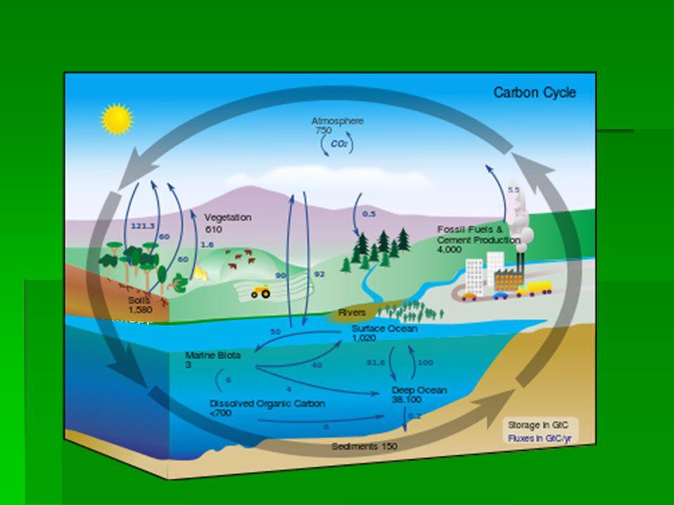 Översiktsschema över kolets kretslopp