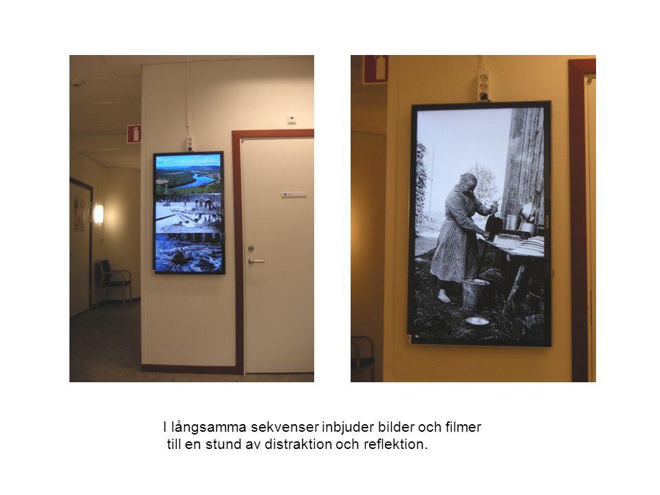 I långsamma sekvenser inbjuder bilder och filmer till en stund av distraktion och reflektion.