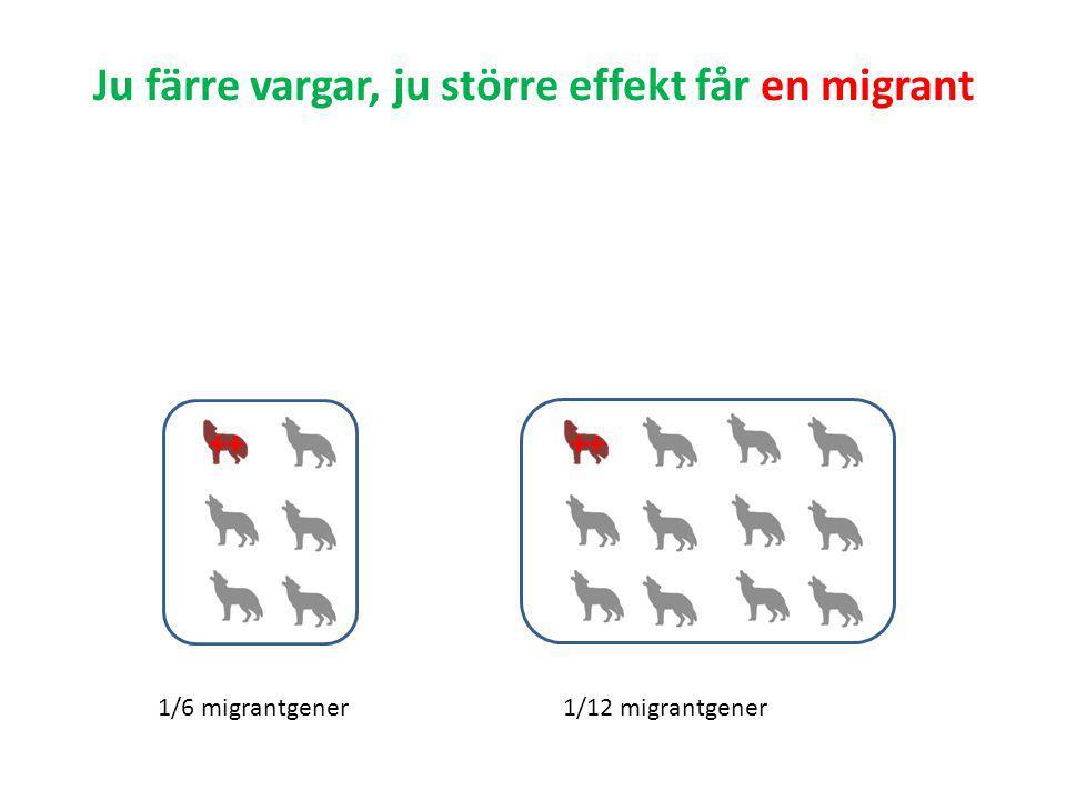 Ju färre vargar, ju större effekt får en migrant ++ 1/6 migrantgener1/12 migrantgener