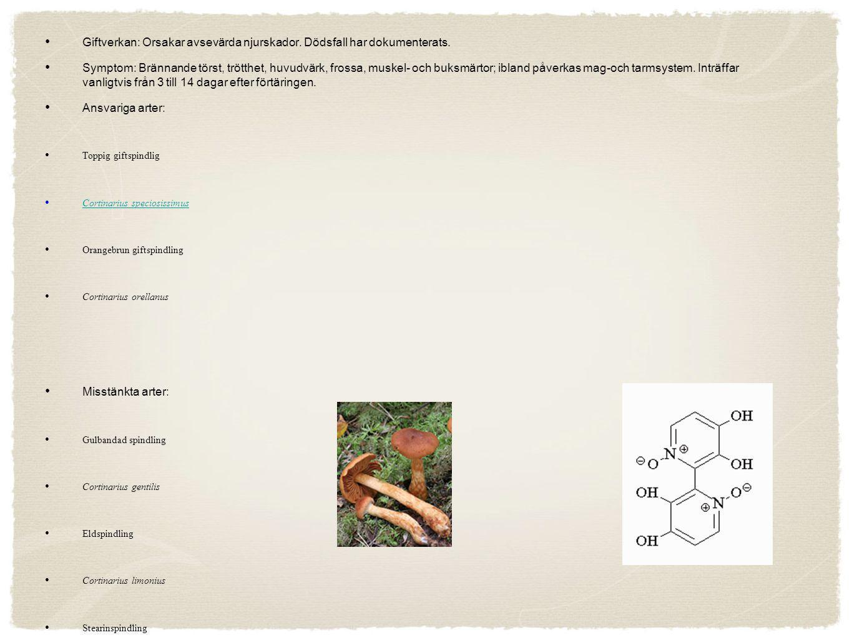Cellgifter 2: Orellanin Den andra typen av cellförgiftning orsakas huvudsakligen av orangebrun giftspindling, Cortinarius orellanus, toppig giftspindl