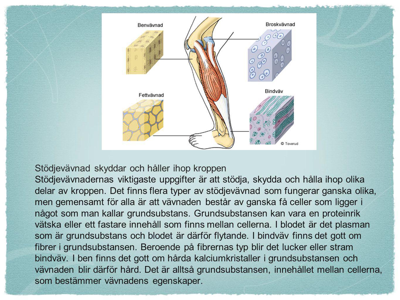 Fettvävnad är en energireserv Fettvävnad innehåller många celler.