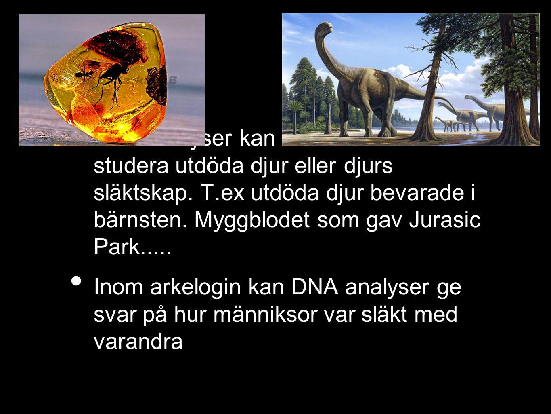 DNA analyser kan användas för att studera utdöda djur eller djurs släktskap.