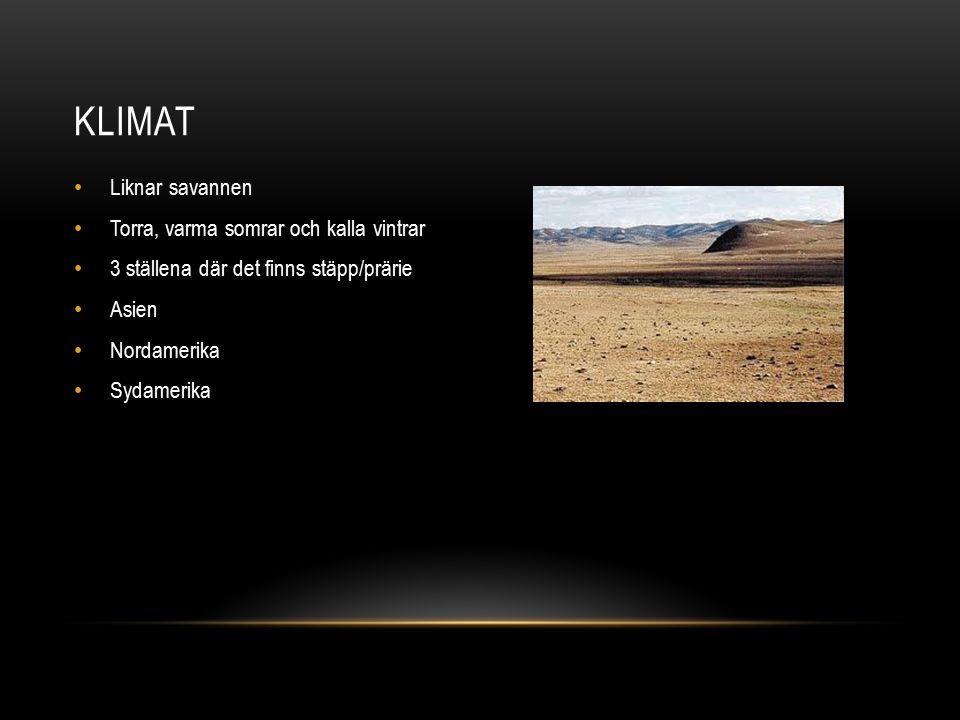 Liknar savannen Torra, varma somrar och kalla vintrar 3 ställena där det finns stäpp/prärie Asien Nordamerika Sydamerika KLIMAT
