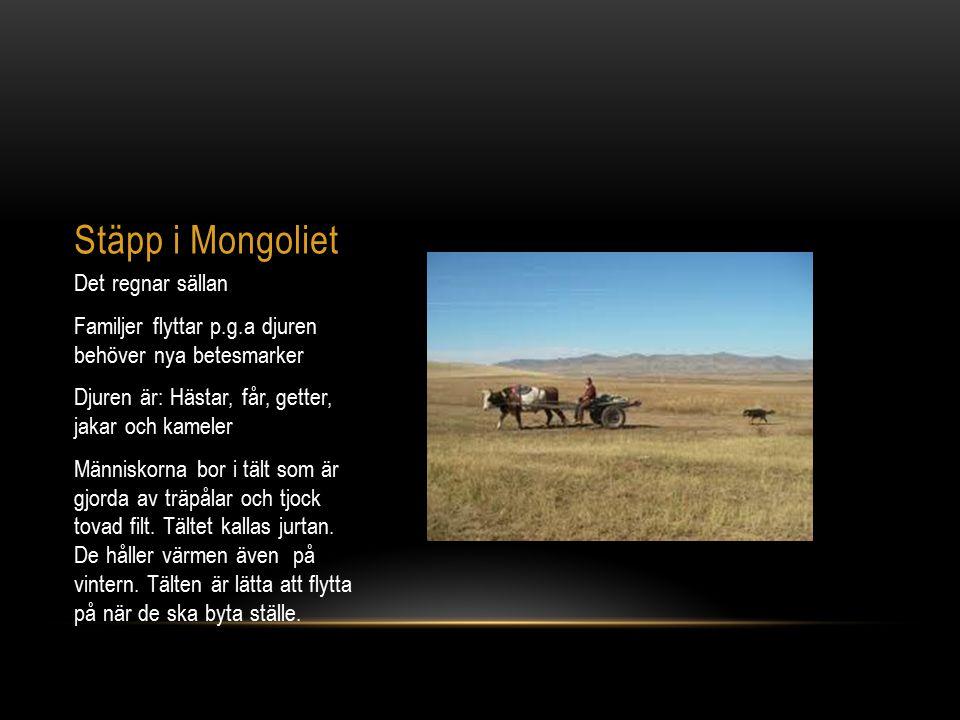 Stäpp i Mongoliet Det regnar sällan Familjer flyttar p.g.a djuren behöver nya betesmarker Djuren är: Hästar, får, getter, jakar och kameler Människorn