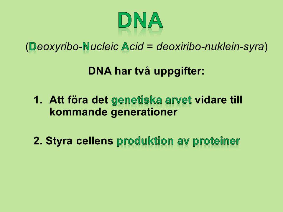Proteiner Proteiner är ämnen som kroppen använder på många olika sätt, till exempel som byggmaterial, som enzymer (som gör att rätt kemiska reaktioner inträffar i kroppen), som hormoner och som transportproteiner (t ex hemoglobin som transporterar syre i blodet).