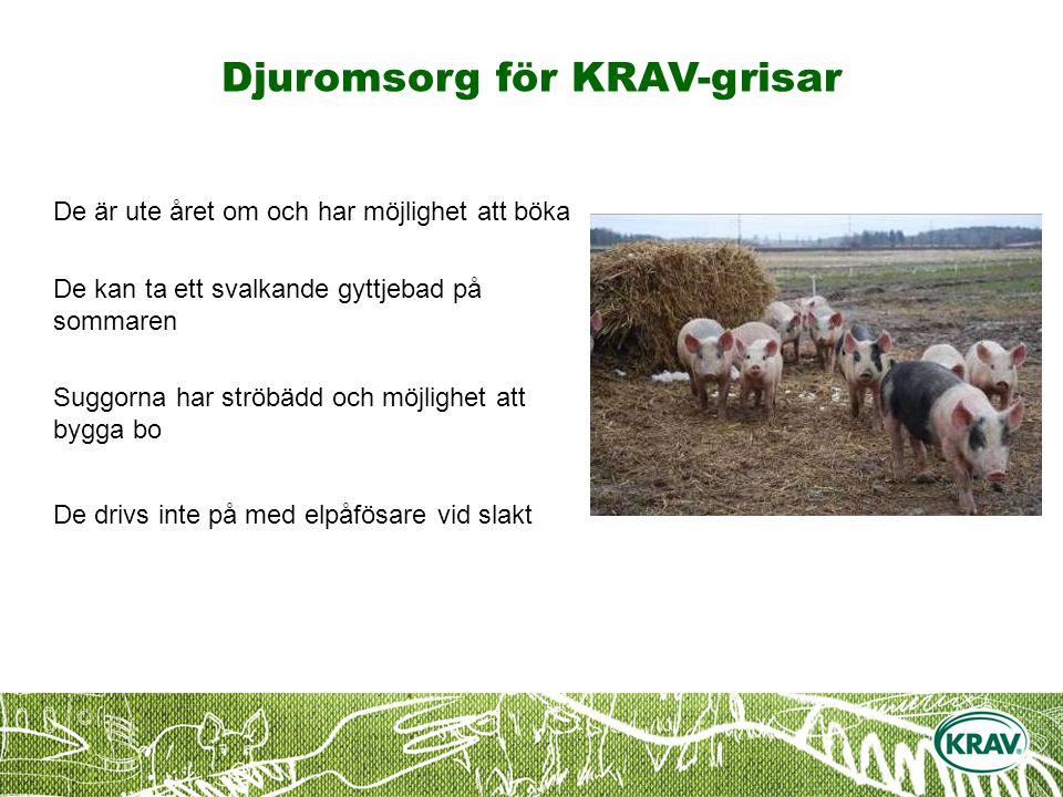 Djuromsorg för KRAV-grisar De är ute året om och har möjlighet att böka De kan ta ett svalkande gyttjebad på sommaren Suggorna har ströbädd och möjlighet att bygga bo De drivs inte på med elpåfösare vid slakt
