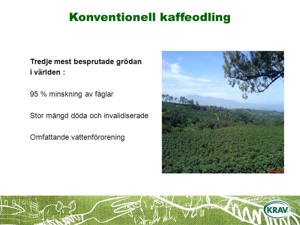 Konventionell kaffeodling Tredje mest besprutade grödan i världen : 95 % minskning av fåglar Stor mängd döda och invalidiserade Omfattande vattenförorening