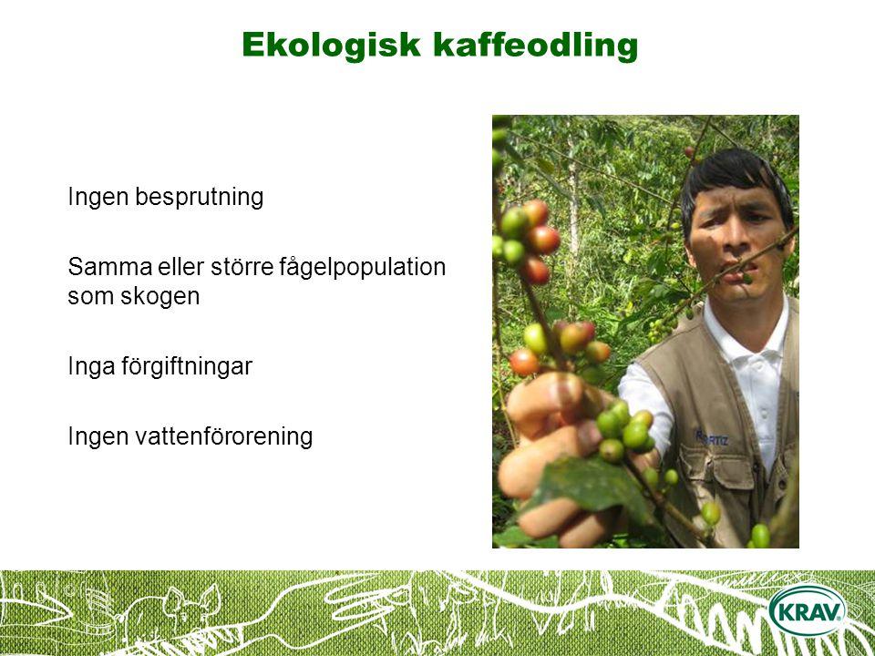Ekologisk kaffeodling Ingen besprutning Samma eller större fågelpopulation som skogen Inga förgiftningar Ingen vattenförorening