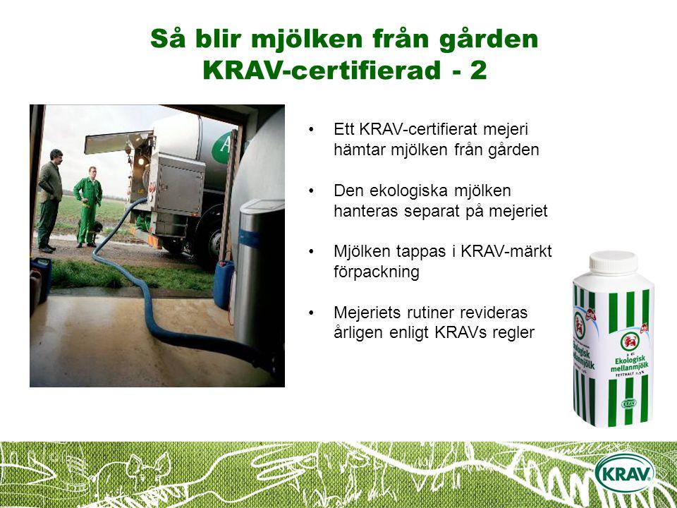 Så blir mjölken från gården KRAV-certifierad - 2 Ett KRAV-certifierat mejeri hämtar mjölken från gården Den ekologiska mjölken hanteras separat på mejeriet Mjölken tappas i KRAV-märkt förpackning Mejeriets rutiner revideras årligen enligt KRAVs regler