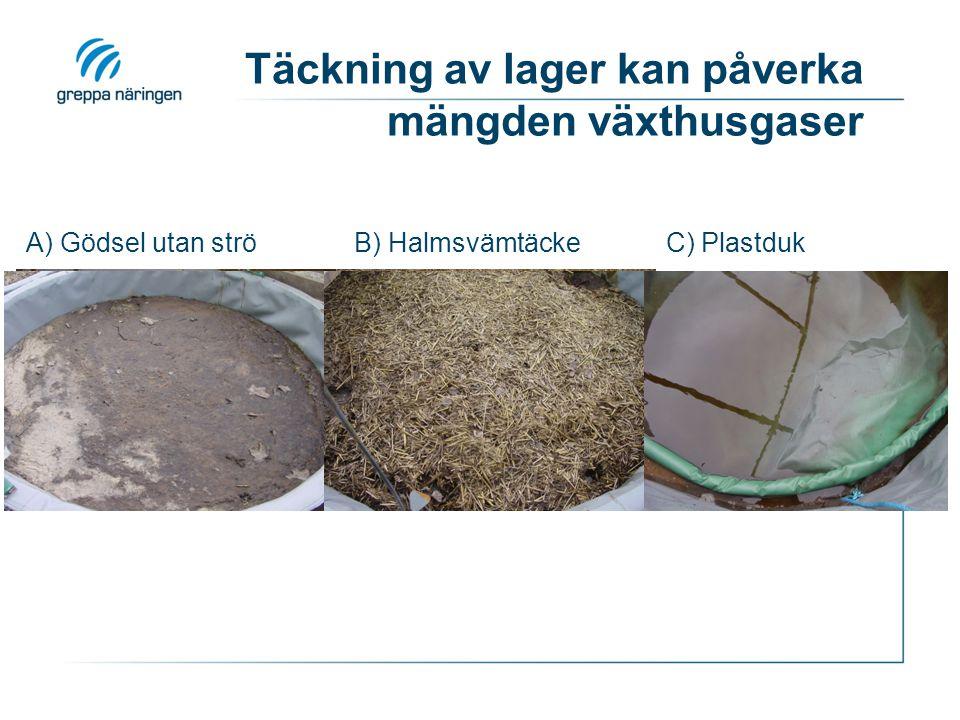 Täckning av lager kan påverka mängden växthusgaser N A) Gödsel utan ströB) HalmsvämtäckeC) Plastduk