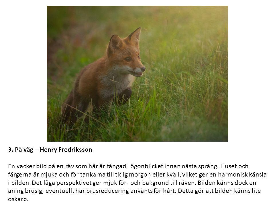 3. På väg – Henry Fredriksson En vacker bild på en räv som här är fångad i ögonblicket innan nästa språng. Ljuset och färgerna är mjuka och för tankar