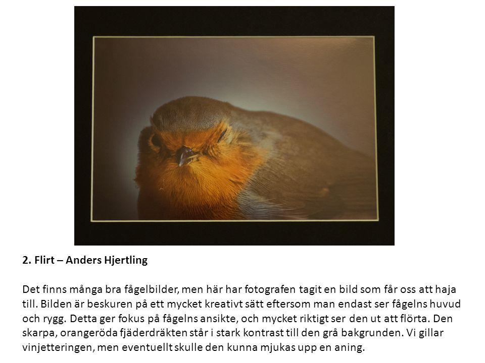 2. Flirt – Anders Hjertling Det finns många bra fågelbilder, men här har fotografen tagit en bild som får oss att haja till. Bilden är beskuren på ett