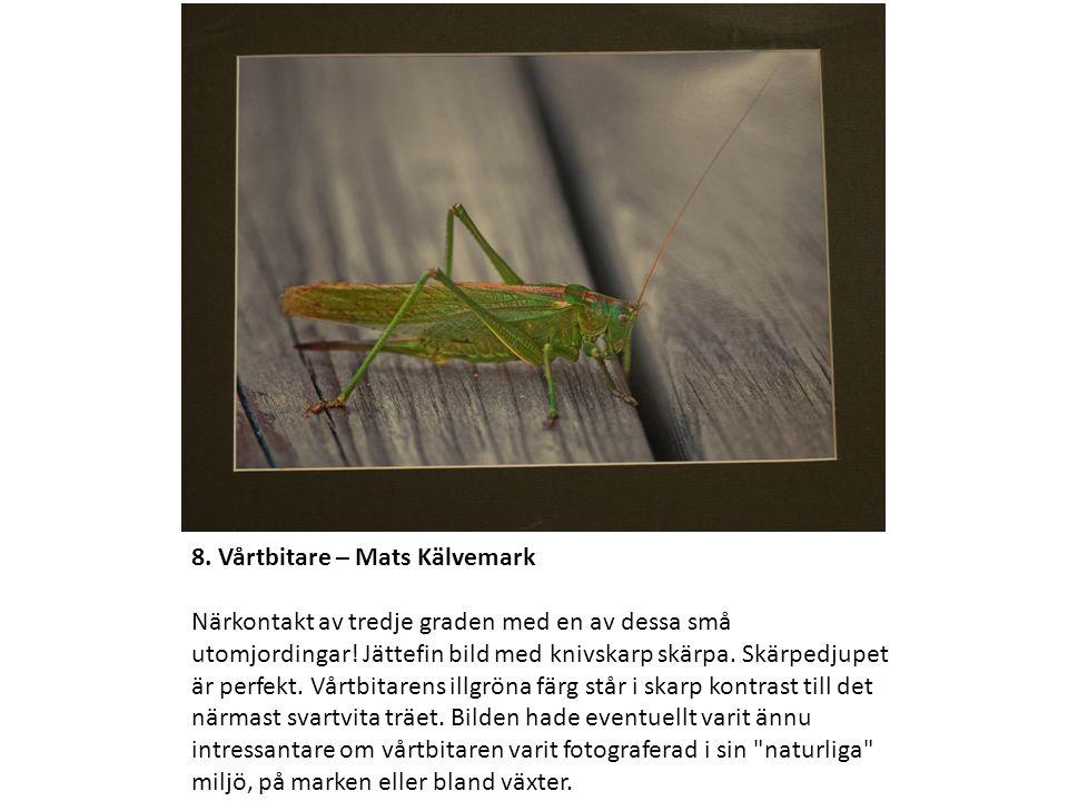 8. Vårtbitare – Mats Kälvemark Närkontakt av tredje graden med en av dessa små utomjordingar.