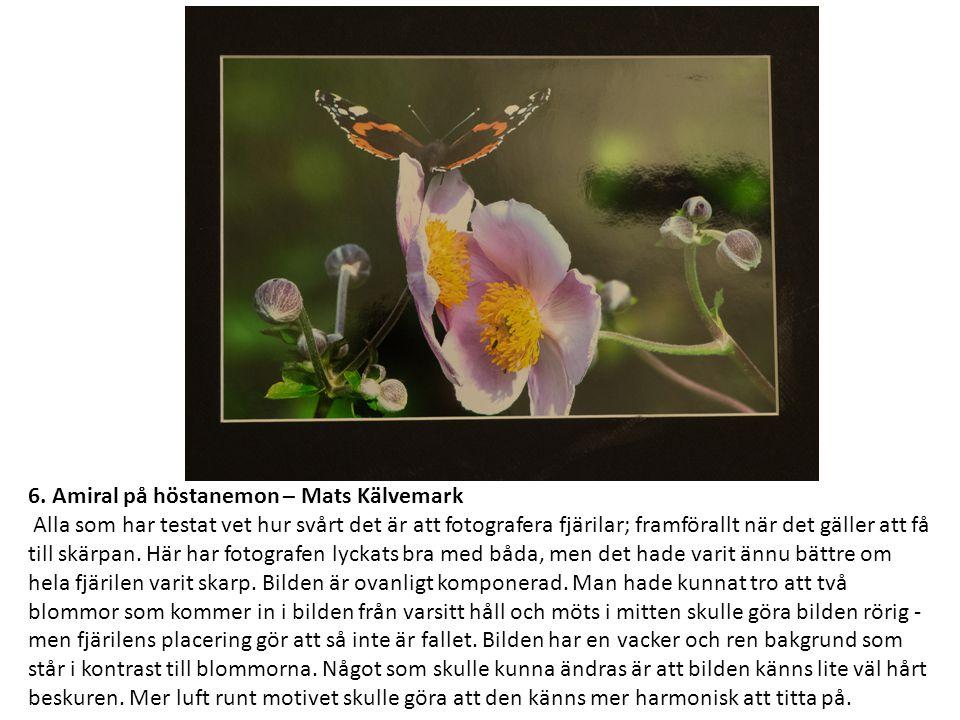 6. Amiral på höstanemon – Mats Kälvemark Alla som har testat vet hur svårt det är att fotografera fjärilar; framförallt när det gäller att få till skä