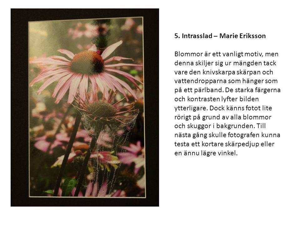 5. Intrasslad – Marie Eriksson Blommor är ett vanligt motiv, men denna skiljer sig ur mängden tack vare den knivskarpa skärpan och vattendropparna som