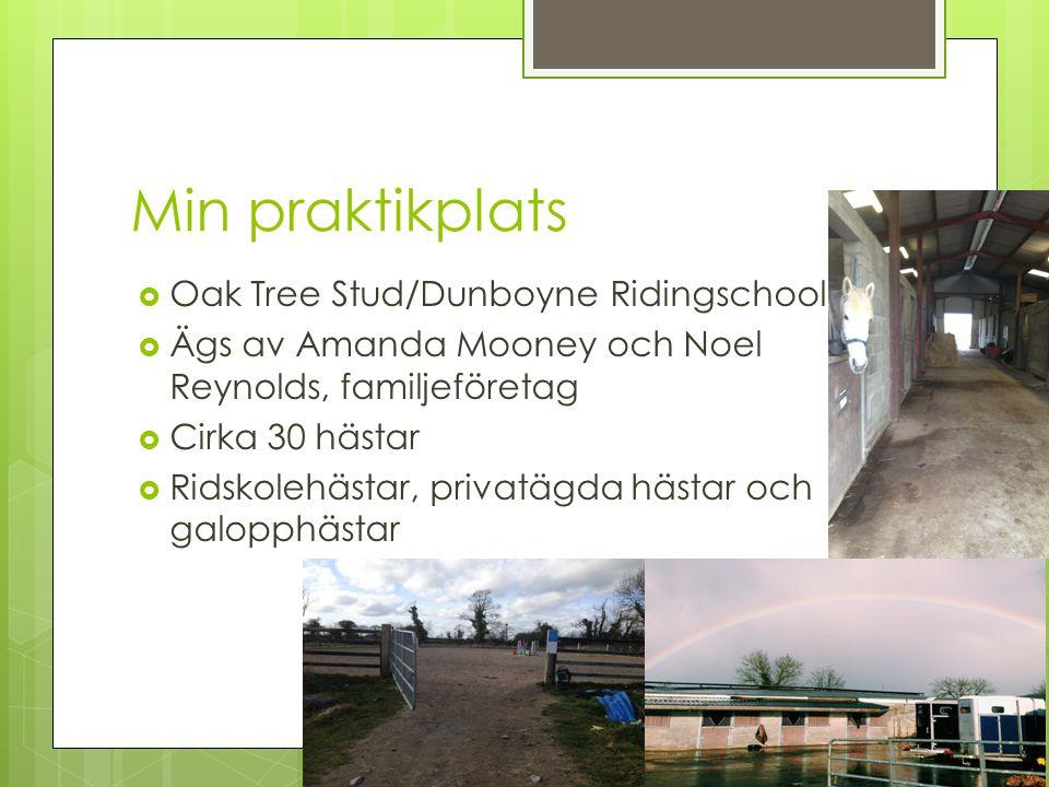 Min praktikplats  Oak Tree Stud/Dunboyne Ridingschool  Ägs av Amanda Mooney och Noel Reynolds, familjeföretag  Cirka 30 hästar  Ridskolehästar, privatägda hästar och galopphästar