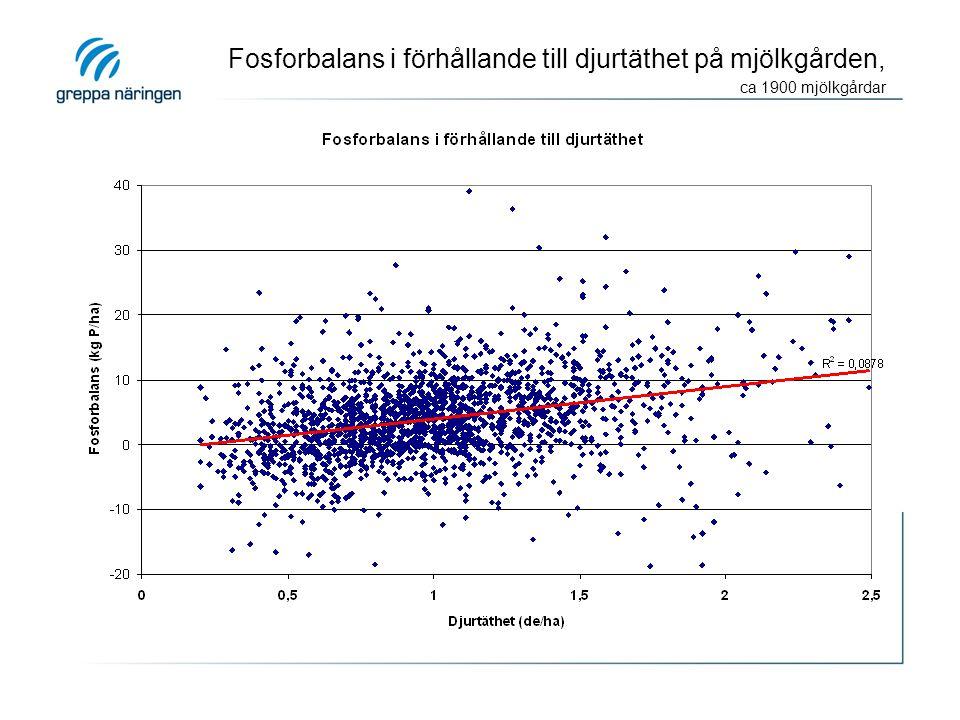 Fosforbalans i förhållande till djurtäthet på mjölkgården, ca 1900 mjölkgårdar