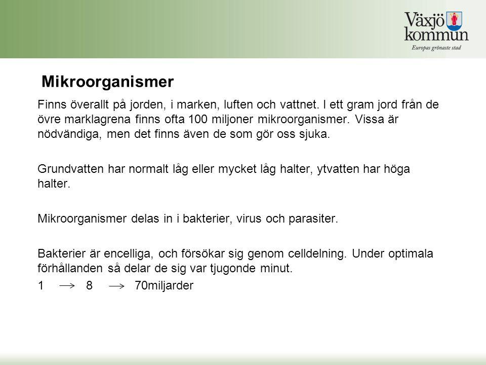 Virus ex.norovirus (vinterkräksjuka) Parasiter ex.