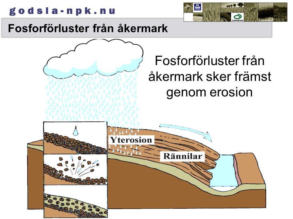 Fosforförluster från åkermark sker främst genom erosion Fosforförluster från åkermark