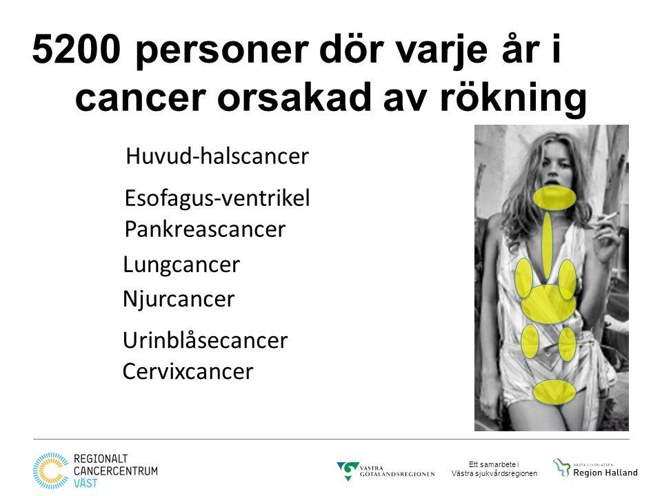 Ett samarbete i Västra sjukvårdsregionen personer dör varje år i cancer orsakad av rökning Huvud-halscancer Urinblåsecancer Cervixcancer Njurcancer Esofagus-ventrikel Pankreascancer Lungcancer 5200