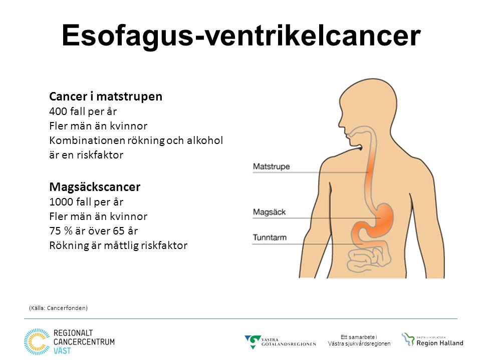 Ett samarbete i Västra sjukvårdsregionen Esofagus-ventrikelcancer Magsäckscancer 1000 fall per år Fler män än kvinnor 75 % är över 65 år Rökning är måttlig riskfaktor Cancer i matstrupen 400 fall per år Fler män än kvinnor Kombinationen rökning och alkohol är en riskfaktor (Källa: Cancerfonden)