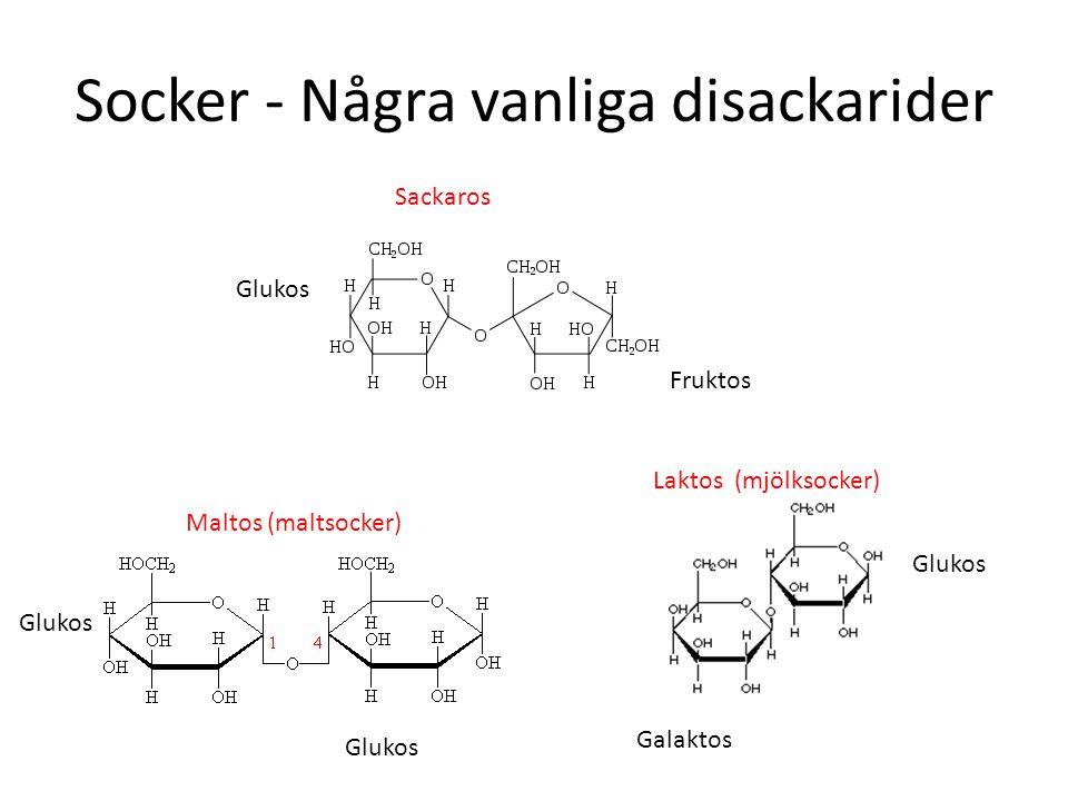 Socker - Några vanliga disackarider Fruktos Glukos Sackaros Glukos Maltos (maltsocker) Glukos Galaktos Laktos (mjölksocker)