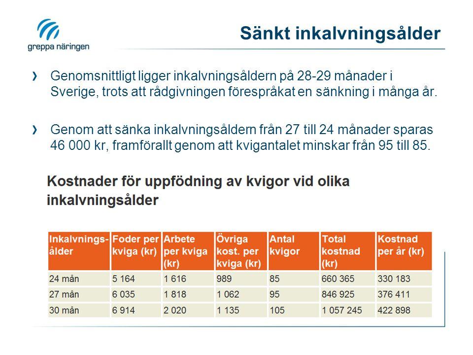 Sänkt inkalvningsålder Genomsnittligt ligger inkalvningsåldern på 28-29 månader i Sverige, trots att rådgivningen förespråkat en sänkning i många år.