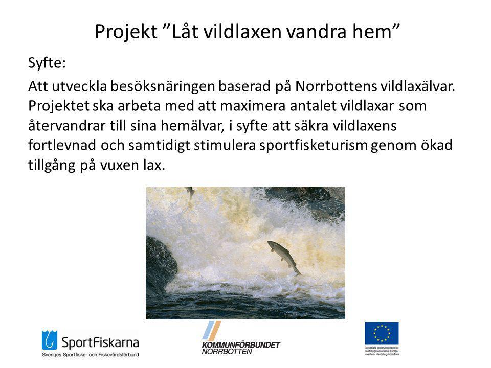 Projekt Låt vildlaxen vandra hem Syfte: Att utveckla besöksnäringen baserad på Norrbottens vildlaxälvar.