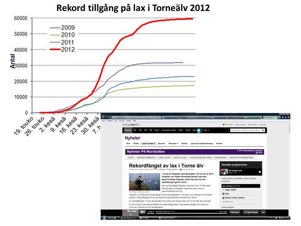 Rekord tillgång på lax i Torneälv 2012