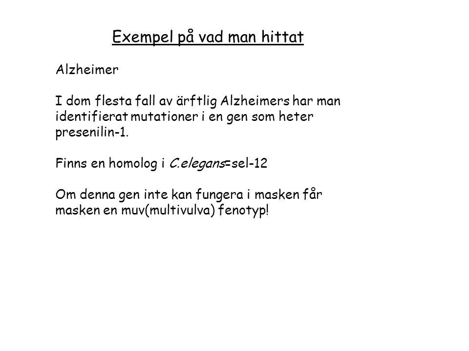 Exempel på vad man hittat Alzheimer I dom flesta fall av ärftlig Alzheimers har man identifierat mutationer i en gen som heter presenilin-1.