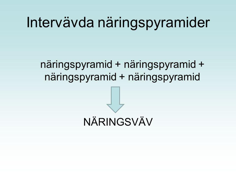 Intervävda näringspyramider näringspyramid + näringspyramid + näringspyramid + näringspyramid NÄRINGSVÄV