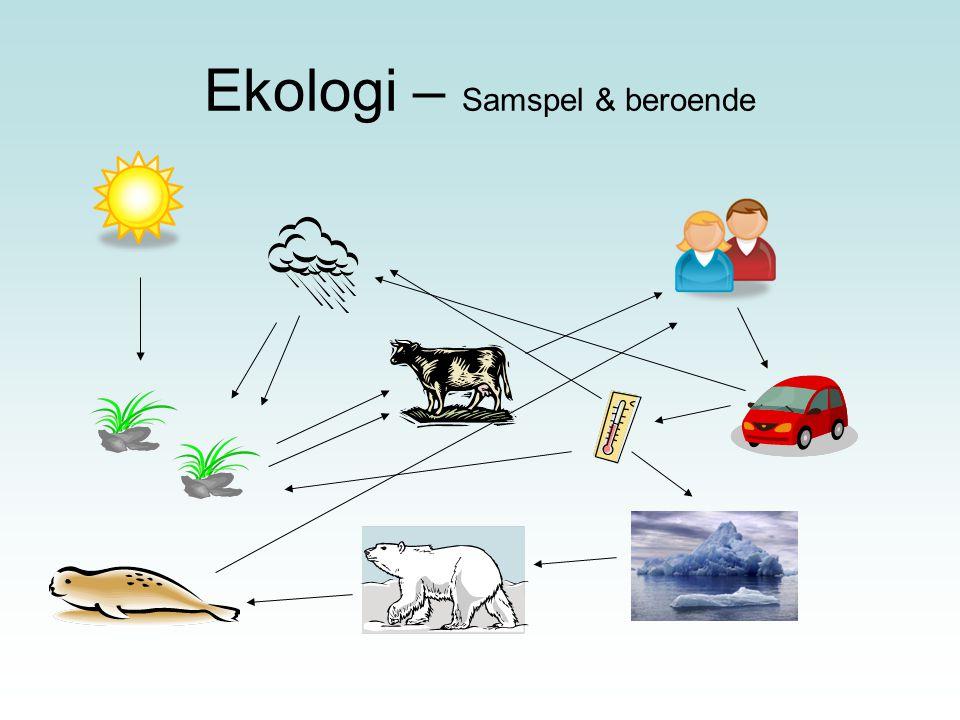 Ekologi – Samspel & beroende
