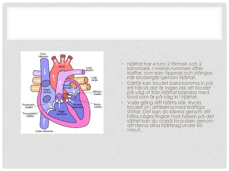 HJÄRTAT Hjärtat är en ihålig muskel som aldrig blir trött av att arbeta. Det pumpar ut blod i kroppen ungefär 90 gånger varje minut dygnet runt. När b