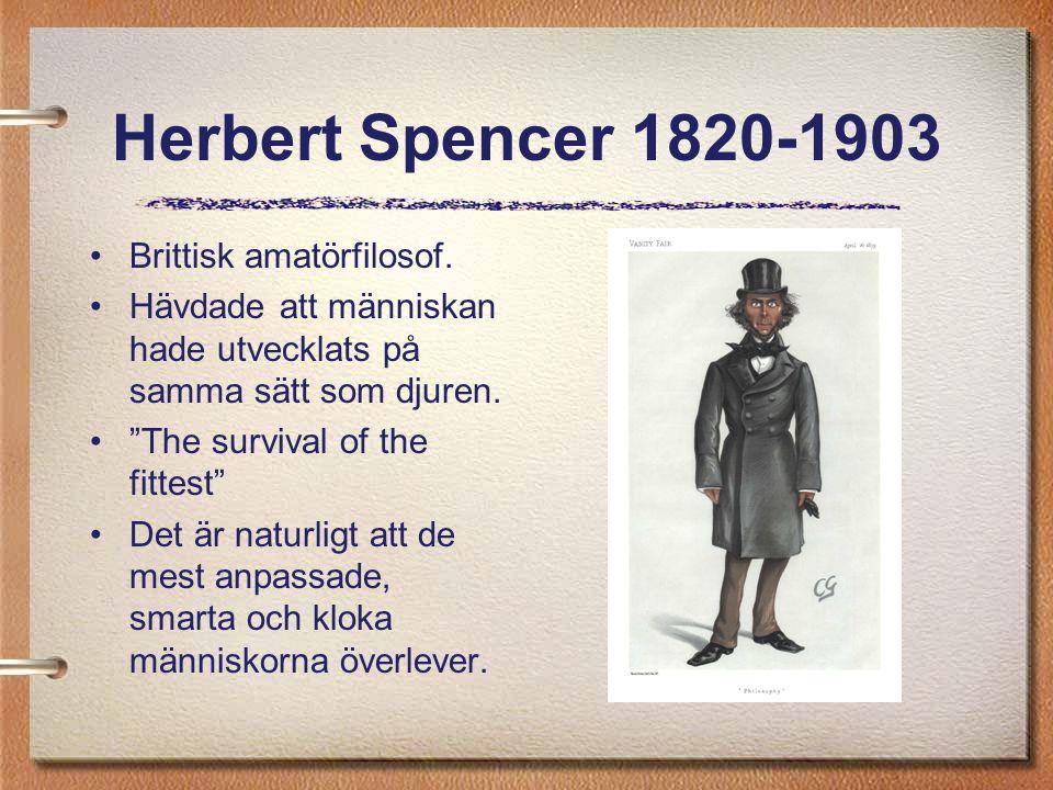 """Herbert Spencer 1820-1903 Brittisk amatörfilosof. Hävdade att människan hade utvecklats på samma sätt som djuren. """"The survival of the fittest"""" Det är"""
