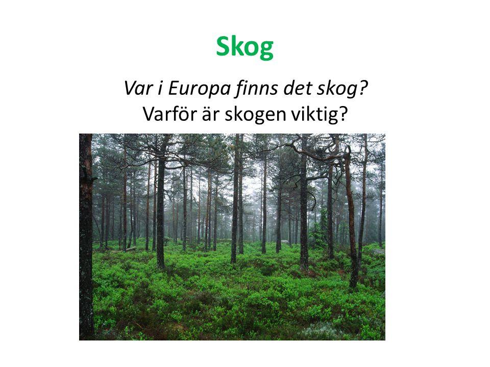 Skog Var i Europa finns det skog? Varför är skogen viktig?