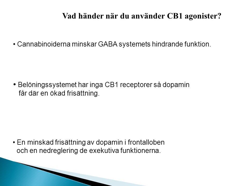 CB1 - finns till stort antal i hjärnan CB2 -ffa i immunsystemet THC binder till cannabisreceptorer ____________________ Maria Ellgren kroppsegna canna