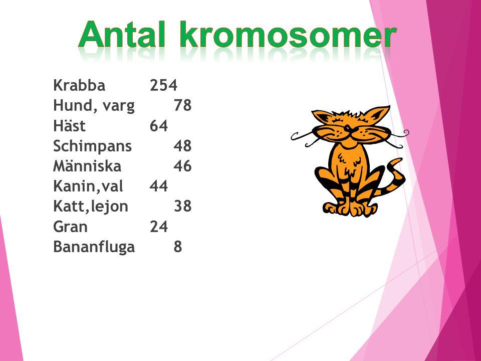 Krabba 254 Hund, varg 78 Häst 64 Schimpans 48 Människa 46 Kanin,val44 Katt,lejon 38 Gran 24 Bananfluga 8