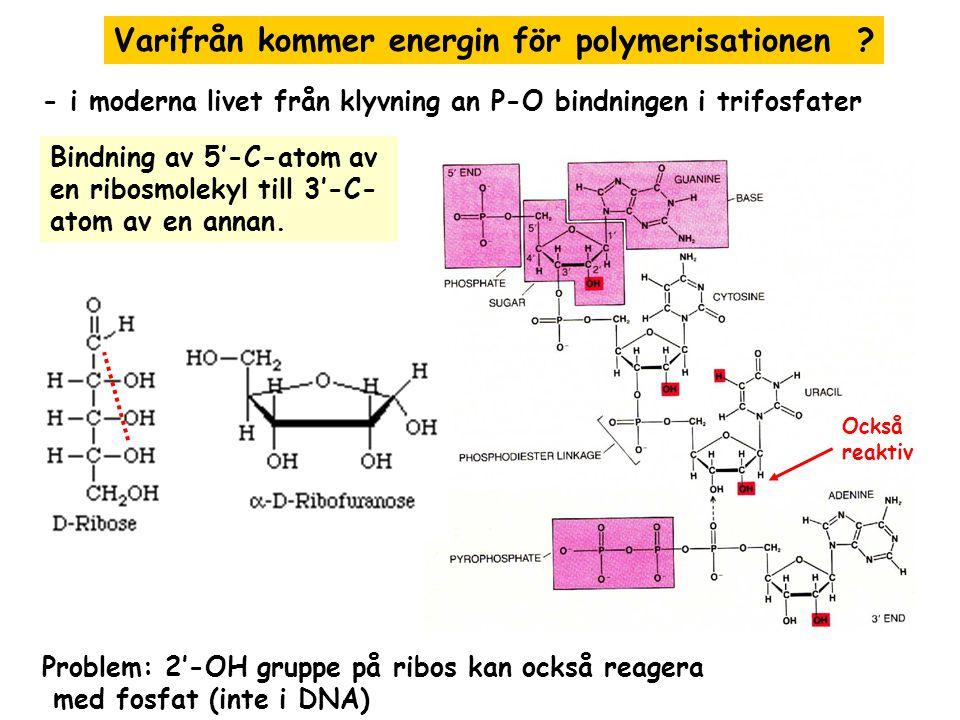 Varifrån kommer energin för polymerisationen .
